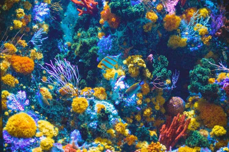 Aquarium filled with colorful coral, fish, and anemones in a dental office